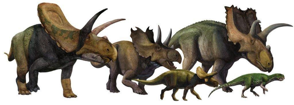 https://animalreader.ru/wp-content/uploads/2014/09/Ceratopsia.jpg